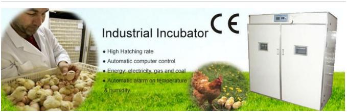 mesin-tetas-telur-industri-264-butir-industrial-incubator-maksindo