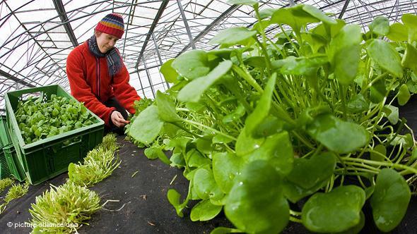 Peluang Usaha Pertanian Organik Dan Analisa Usahanya Agrowindo