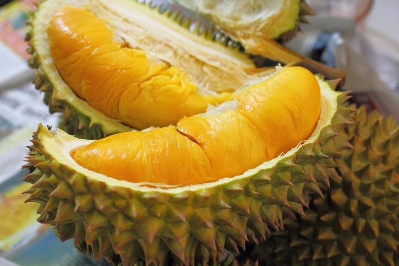 Peluang Usaha Budidaya Durian Montong Dan Analisa Usahanya