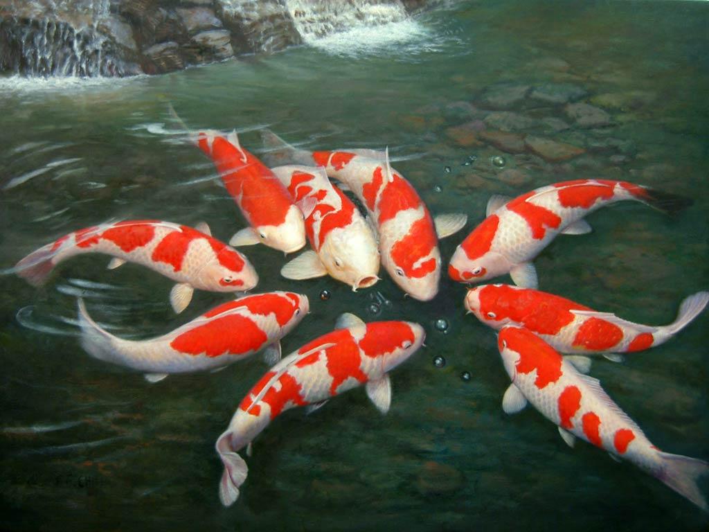 Peluang Usaha Budidaya Ikan Koi Dan Analisa Usahanya Agrowindo