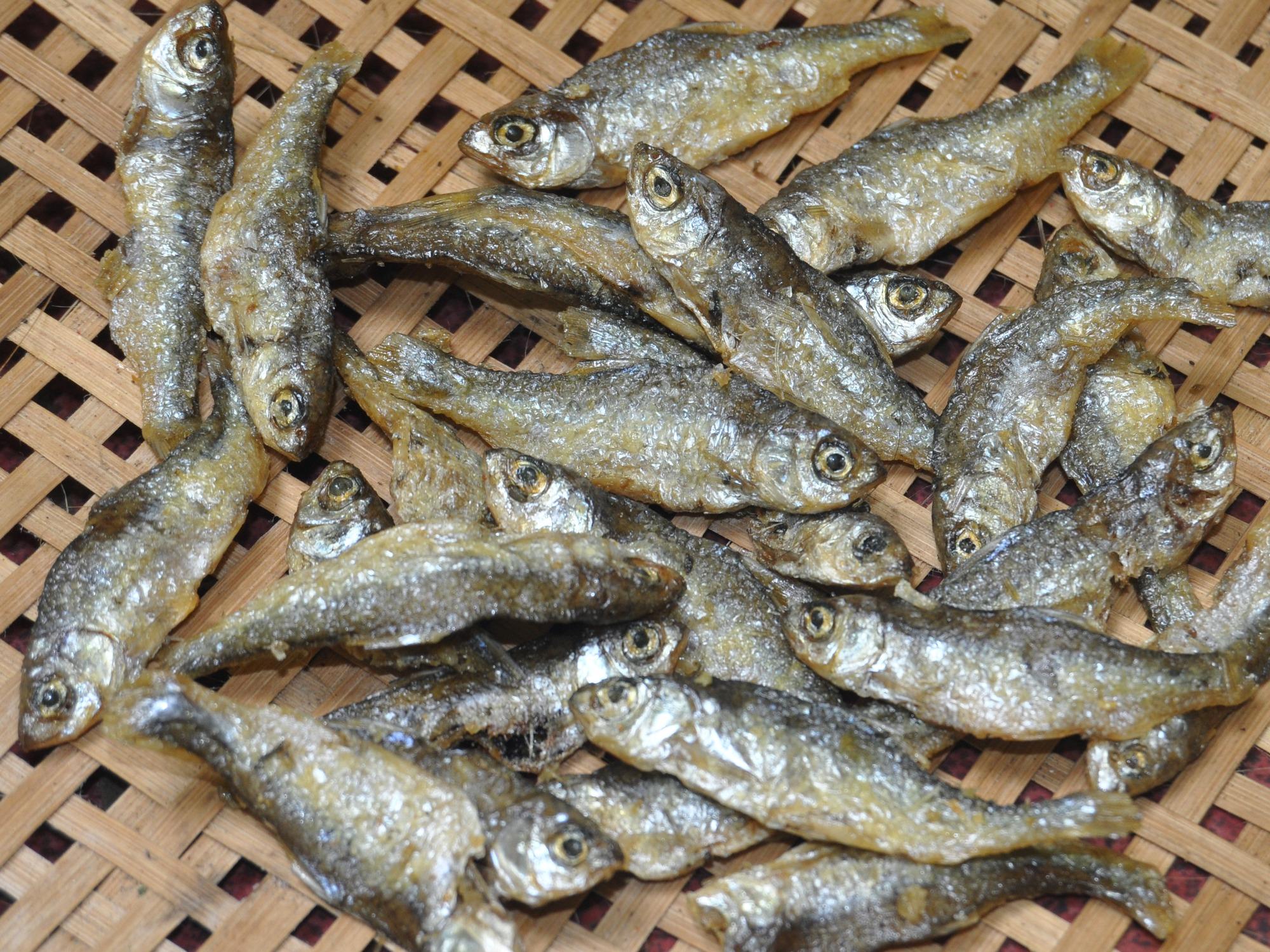 Peluang Usaha Budidaya Ikan Bilis Dan Analisa Usahanya - Agrowindo