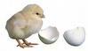 Mesin Penetas Telur Manual 30 Butir (EM-30)